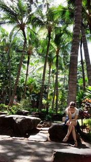 海,夏,木,海外,旅行,ハワイ,おしゃれ,島国