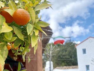 食べ物,空,屋外,オレンジ,果物,果実,三重県,オレンジ色,食材,志摩地中海村