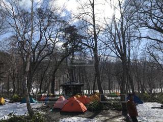雪に覆われた木の上に乗っている人々のグループの写真・画像素材[2216693]