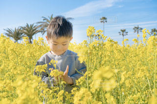 自然,黄色,菜の花,鮮やか,子供,優しい,幸せ,快晴,男の子,菜の花畑,4歳,yellow,渥美半島