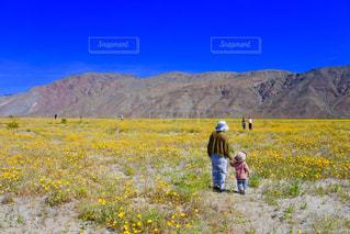 砂漠にあった黄色いお花畑の写真・画像素材[1866696]