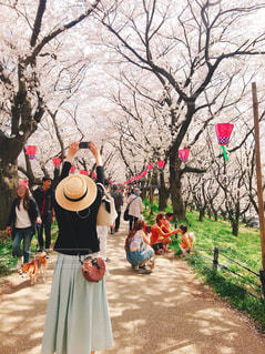 自然,花,春,桜,花見,桜並木,埼玉,野外,ライフスタイル,はなみ,幸手現権堂