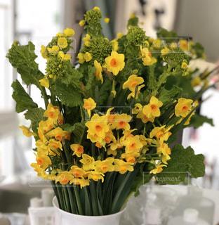 花,菜の花,水仙