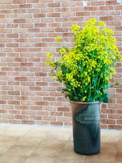 花,黄色,菜の花,イエロー