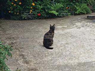 猫,屋外,後ろ姿,野良猫