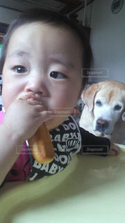 犬,食べ物,男の子,ラブラドール