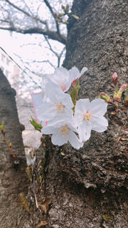春がやってきたの写真・画像素材[1965014]