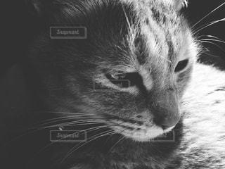 猫のクローズアップの写真・画像素材[2319999]