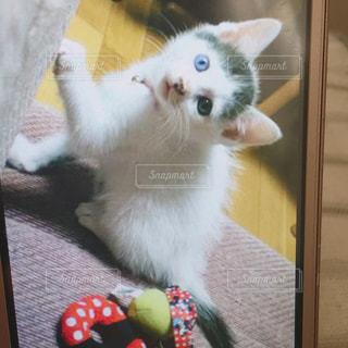 カメラのポーズをとる鏡の前に座っている猫の写真・画像素材[2320014]
