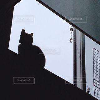 窓の前に座っている猫の写真・画像素材[2320017]