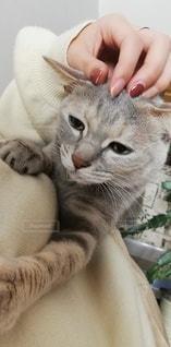 猫,動物,ペット,人物,誕生日,抱っこ,ネコ,222,2月22日,にゃんにゃんにゃん