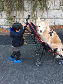 家族,犬,動物,屋外,子供,仲良し,いぬ,人物,人,息子,お散歩,ボーダーコリー,ベビーカー,わんちゃん,日中