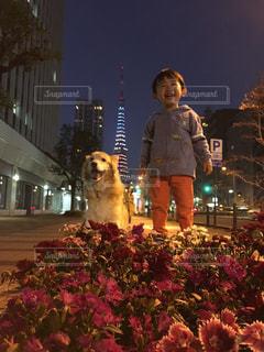 家族,犬,花,東京タワー,夜,動物,屋外,子供,仲良し,いぬ,人物,人,歩道,息子,お散歩,ボーダーコリー,わんちゃん