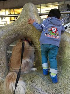 犬,風景,夜,動物,屋外,後ろ姿,子供,人物,背中,人,幼児,男の子,ふれあい,覗き込み,ボーダコリー