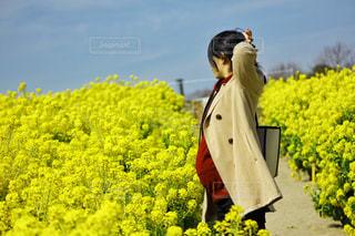 自然,風景,空,屋外,黄色,菜の花,光,くもり,日中