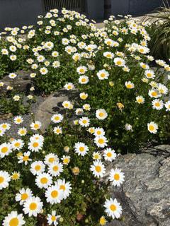 花,春,散歩,花見,装飾,黄,草木,春の兆し,日中,スノーポール