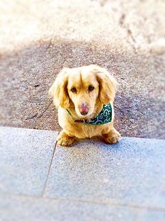 犬,散歩,わんちゃん,待ってる,寄り道,玄関前,ご飯待ち