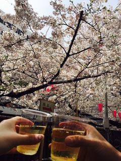 桜,目黒,お昼,お散歩,チェリーブロッサム,人気スポット,目黒川沿い,chil,昼からBeer