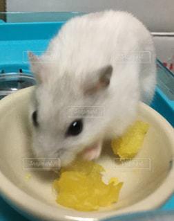 ボウルから食べる猫の写真・画像素材[1808426]