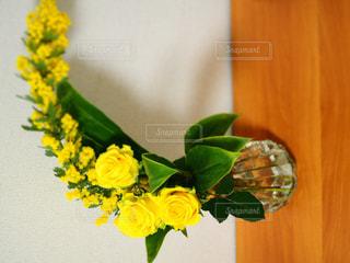 黄色,バラ,お花,鮮やか,ミモザ,華,エレガント