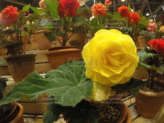 花,冬,綺麗,黄色,黄色い花,flower,加工なし,きいろ,yellow
