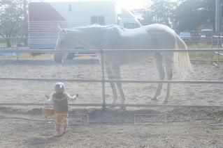 子ども,冬,動物,うさぎ,屋外,晴れ,後ろ姿,帽子,散歩,影,日常,子供,人物,外,逆光,後姿,馬,明るい,お散歩,1歳,後ろ,うしろ姿,白馬,ウサギ,うさ耳,白い馬,子供と動物