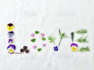 花,LOVE,文字,ピンク,緑,植物,白,カラフル,青,葉っぱ,紫,黄色,花びら,パープル,ハート,ブルー,メッセージ,イエロー,ラブ,パンジー,グリーン,ハーブ,ホワイト,ローズマリー,アルファベット,ビオラ,イメージ,花文字
