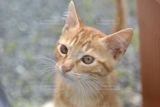 猫のクローズアップの写真・画像素材[2291443]