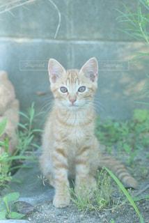 座っている猫の写真・画像素材[2291445]