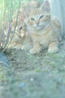 猫の写真・画像素材[2291447]