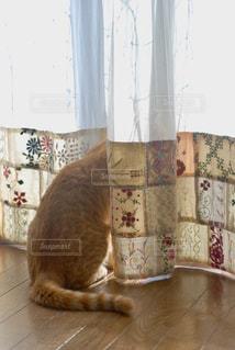 外をのぞいている猫の写真・画像素材[2291472]