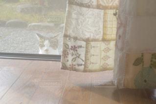 庭から室内をのぞいている猫の写真・画像素材[2291479]
