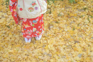 イチョウの絨毯の写真・画像素材[2584916]