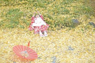 イチョウの絨毯の写真・画像素材[2585001]