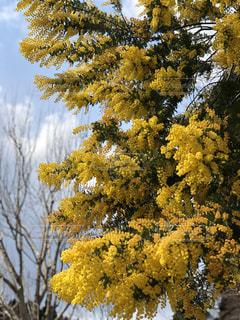 木,屋外,黄色,鮮やか,日中,フォトジェニック,色・表現