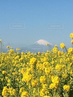 富士山の写真・画像素材[1861934]