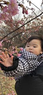 桜の写真・画像素材[1870619]