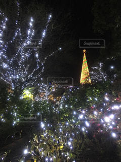 クリスマスツリーの写真・画像素材[1876500]