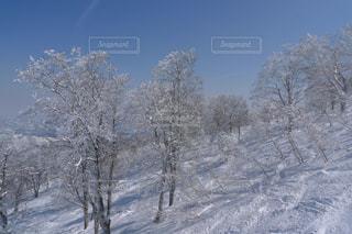 雪に覆われた木の写真・画像素材[1813544]