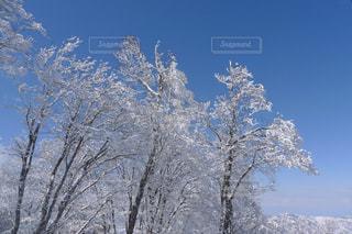 雪に覆われた木の写真・画像素材[1813546]
