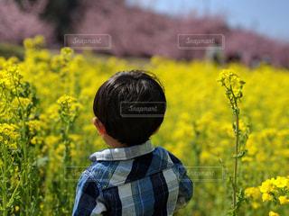 子ども,春,黄色,菜の花,少年,河津桜