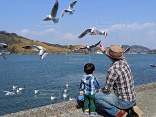 海,鳥,湖,親子,後ろ姿,父と子,海鳥,かもめ,浜名湖