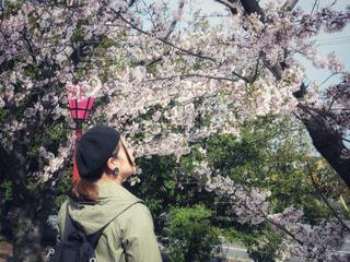 お花見の写真・画像素材[2002036]