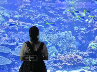 女性,魚,青,後ろ姿,水族館,後姿,旅行