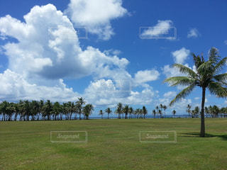 自然,風景,夏,海外,アメリカ,景色,旅行,グアム,海外旅行,休暇,インスタ映え