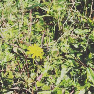 自然,公園,花,黄色,草,イエロー,孤独,色