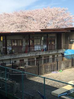 花,春,桜,ピンク,学校,部室,さくら