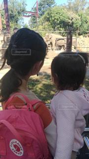 親子,後ろ姿,子供,象,動物園,母