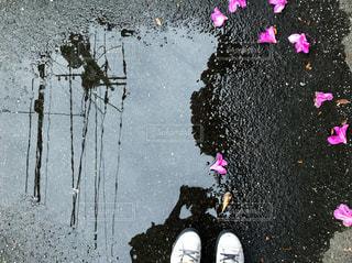 水たまりと花びらとワタシの写真・画像素材[2174880]