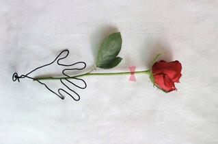 感謝の気持ち 一輪のバラをプレゼントの写真・画像素材[4318029]